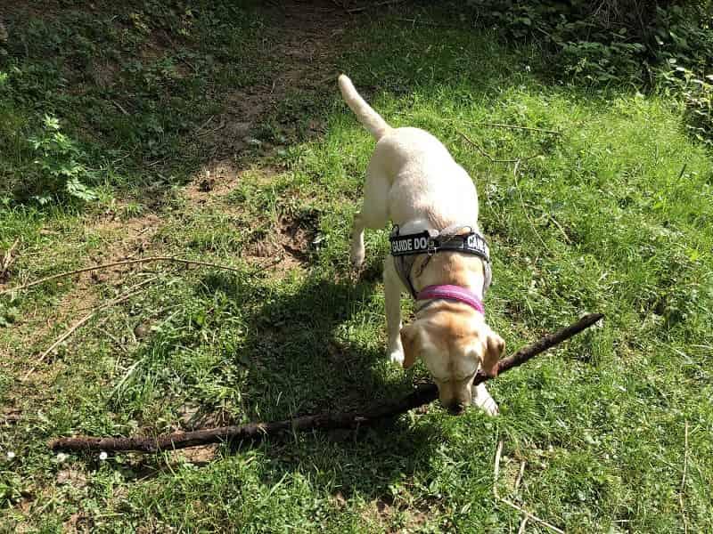 Niente scuse da Suor Amelia ed i cani guida non entrano