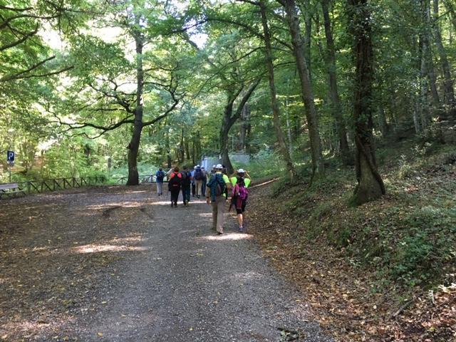 il gruppo cammina compatto immerso nel bosco